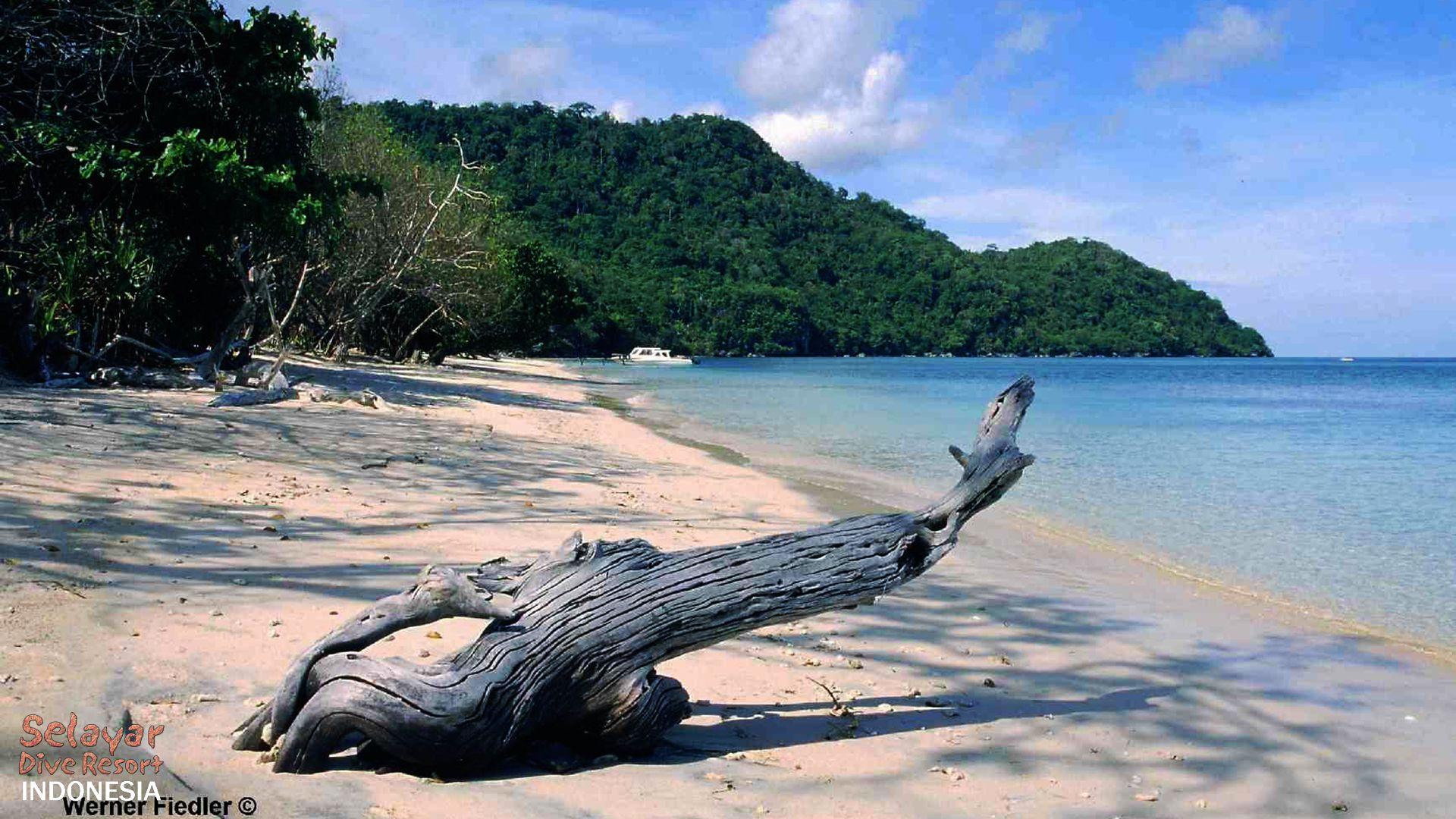 Tauchen Indonesien Sulawesi